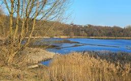 Ajardine com árvores desencapadas e os juncos secos perto do lago Imagem de Stock