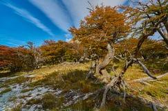 Ajardine com árvores do outono, o céu nebuloso e a neve nas montanhas no parque nacional nacional do Los Glaciares do parque Fotos de Stock Royalty Free