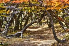 Ajardine com árvores do outono, o céu nebuloso e a neve nas montanhas no parque nacional nacional do Los Glaciares do parque Foto de Stock