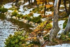 Ajardine com árvores do outono, o céu nebuloso e a neve nas montanhas no parque nacional nacional do Los Glaciares do parque Fotos de Stock