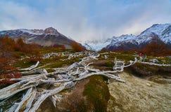 Ajardine com árvores do outono, o céu nebuloso e a neve nas montanhas no parque nacional nacional do Los Glaciares do parque Foto de Stock Royalty Free