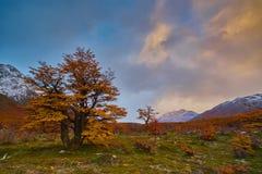 Ajardine com árvores do outono, o céu nebuloso e a neve nas montanhas no parque nacional nacional do Los Glaciares do parque Imagem de Stock Royalty Free