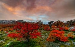 Ajardine com árvores do outono, o céu nebuloso e a neve nas montanhas no parque nacional nacional do Los Glaciares do parque Fotografia de Stock