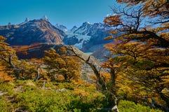 Ajardine com árvores do outono, o céu nebuloso e a neve nas montanhas no parque nacional nacional do Los Glaciares do parque Imagem de Stock