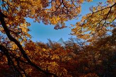 Ajardine com árvores do outono, o céu nebuloso e a neve nas montanhas no parque nacional nacional do Los Glaciares do parque Imagens de Stock