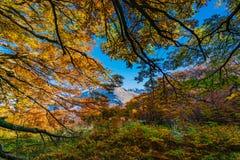 Ajardine com árvores do outono, o céu nebuloso e a neve nas montanhas no parque nacional nacional do Los Glaciares do parque Fotografia de Stock Royalty Free