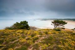 Ajardine com árvores e as flores amarelas com uma praia e uma SK escura Fotografia de Stock Royalty Free