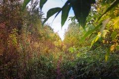 Ajardine com árvores e grama amarelas no outono Fotografia de Stock