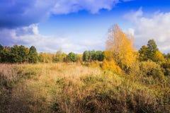 Ajardine com árvores e grama amarelas no outono Imagem de Stock