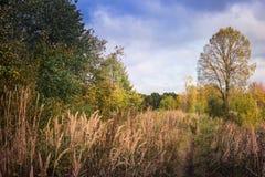 Ajardine com árvores e grama amarelas no outono Fotografia de Stock Royalty Free