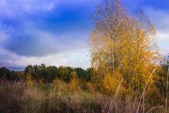 Ajardine com árvores e grama amarelas no outono Imagens de Stock Royalty Free