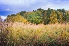 Ajardine com árvores e grama amarelas no outono Imagens de Stock