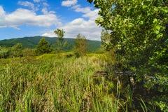 ajardine com árvores e grama em uma montanha Fotos de Stock