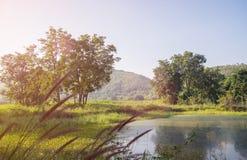 Ajardine com árvores e lagos das montanhas na parte dianteira Imagem de Stock Royalty Free
