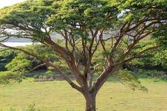 Ajardine com árvores e molhe com a vaca no primeiro plano Fotos de Stock
