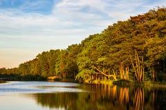 Ajardine com árvores e molhe em Prerow, Alemanha Foto de Stock