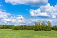 Ajardine com árvores e um céu nebuloso azul Fotos de Stock Royalty Free
