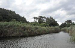 Ajardine com árvores e um rio na parte dianteira em agosto de 2016 Fotografia de Stock Royalty Free