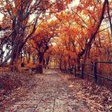 Ajardine com árvores em um dia ensolarado no outono Imagens de Stock