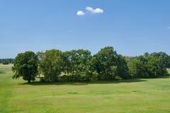 Ajardine com árvores em um prado no verão Imagem de Stock
