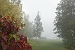 Ajardine com árvores, folhas das cores da queda e névoa imagens de stock royalty free