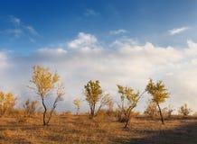Ajardine com árvores, folhas do amarelo e o céu nebuloso no por do sol Imagem de Stock Royalty Free