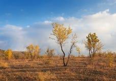 Ajardine com árvores, folhas do amarelo e o céu nebuloso no por do sol Imagens de Stock