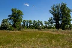 Ajardine com árvores verdes, prado e o céu azul Imagem de Stock