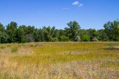Ajardine com árvores verdes, prado e o céu azul Foto de Stock Royalty Free