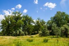 Ajardine com árvores verdes, prado e o céu azul Foto de Stock