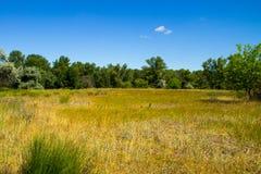 Ajardine com árvores verdes, prado e o céu azul Imagens de Stock Royalty Free