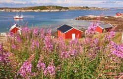 Ajardine com abeto vermelho, fiorde e clareira com azaléia de florescência Imagens de Stock