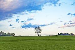 Ajardine com acres, árvores e as nuvens escuras Imagem de Stock Royalty Free