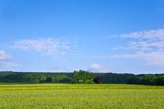 Ajardine com acres, milho e as nuvens brancas Imagem de Stock