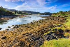 Ajardine com alga ao longo do lado do rio Fotos de Stock Royalty Free