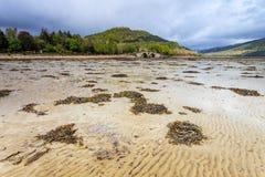 Ajardine com alga em uma cama de rio Fotos de Stock