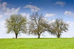 Ajardine com algumas árvores e nuvens em um céu azul Fotos de Stock