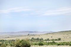 Ajardine com arbustos e árvores, Masai Mara National Park Fotos de Stock