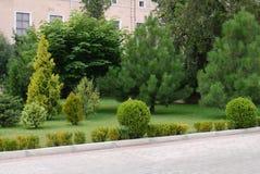 Ajardine com arbustos e os pinhos decorativos em um gramado perto de uma casa cor-de-rosa Fotos de Stock Royalty Free