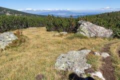 Ajardine com arbustos e pedras na montanha de Rila Fotografia de Stock
