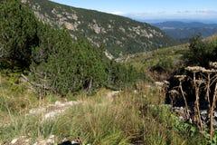 Ajardine com arbustos e pedras na montanha de Rila Imagem de Stock Royalty Free