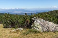 Ajardine com arbustos e pedras na montanha de Rila Foto de Stock Royalty Free