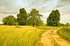 Ajardine com as árvores contra o contexto de um céu nebuloso Imagem de Stock Royalty Free