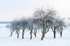 Ajardine com as árvores de maçã desencapadas e hoarfrosted no jardim Imagens de Stock Royalty Free
