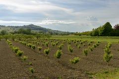 Ajardine com as árvores de pêssego no vale de Curone, Itália Fotos de Stock