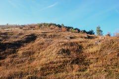 Ajardine com as árvores do céu azul e do outono e escove em cima dos montes da pastagem Fotografia de Stock
