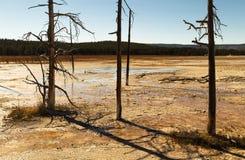 Ajardine com as árvores inoperantes no parque nacional de Yellowstone, WY, EUA Foto de Stock
