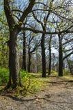 Ajardine com as árvores na área de Harz, Alemanha Foto de Stock