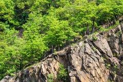 Ajardine com as árvores na área de Harz, Alemanha Fotos de Stock Royalty Free