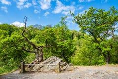 Ajardine com as árvores na área de Harz, Alemanha Imagens de Stock Royalty Free